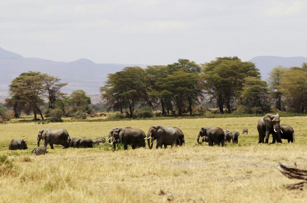 Gat Safaris - Kenya Africa